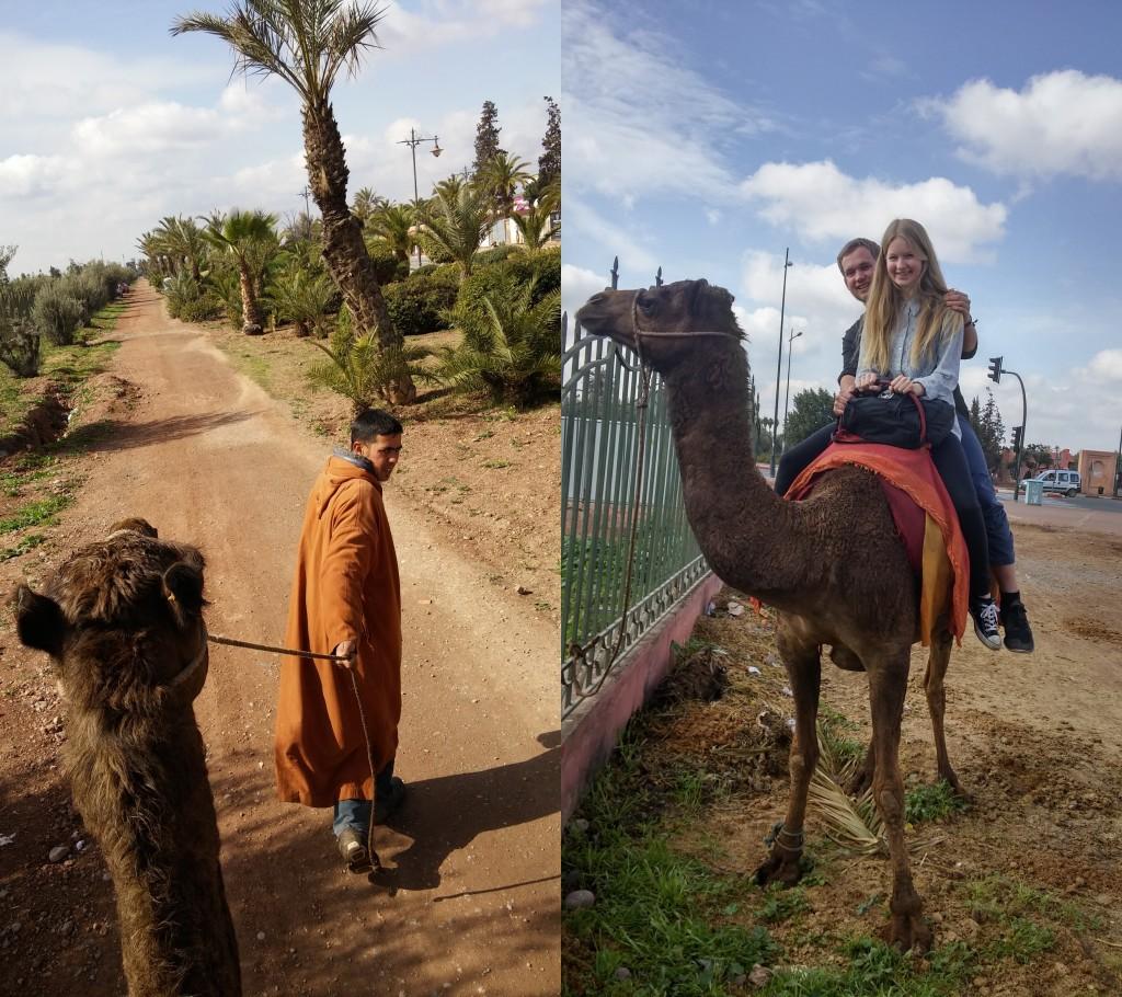 Kamel ridetur